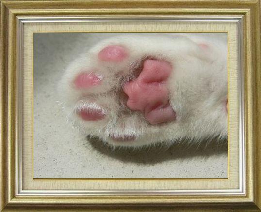 ねこ 猫 肉球祭り 35番