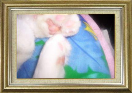 ねこ 猫 肉球祭り 38番