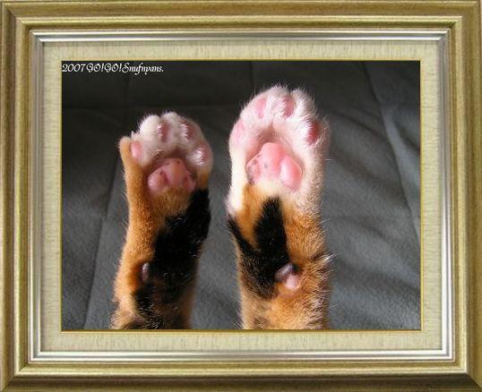 ねこ 猫 肉球祭り 39番