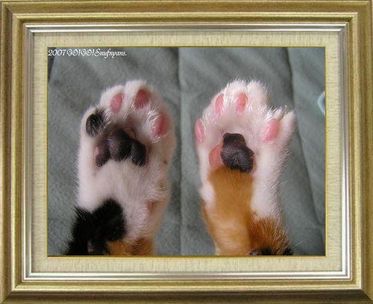 ねこ 猫 肉球祭り 41番