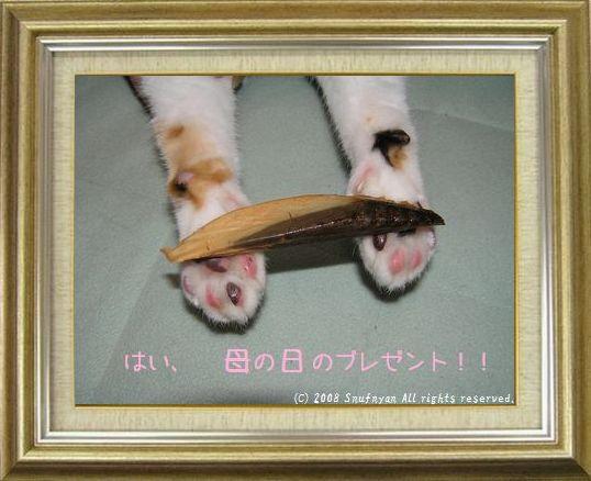 ねこ 猫 肉球祭り 42番