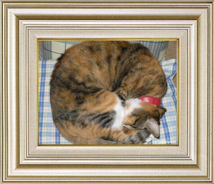 ねこ 猫 あんもにゃいと祭り 02番