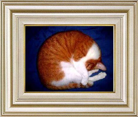 ねこ 猫 あんもにゃいと祭り 15番
