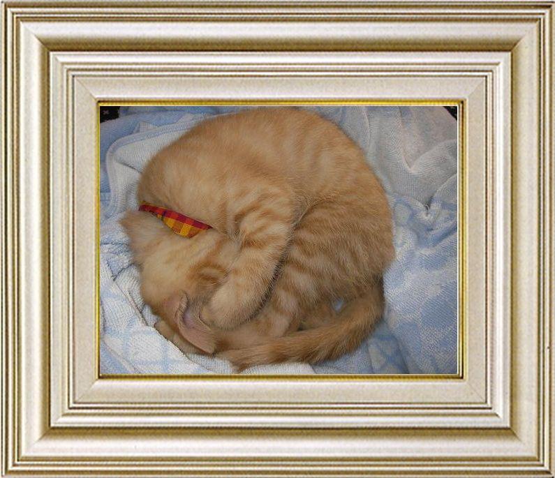 ねこ 猫 あんもにゃいと祭り 16番