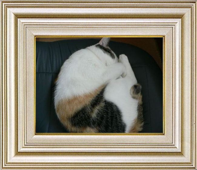 ねこ 猫 あんもにゃいと祭り 17番