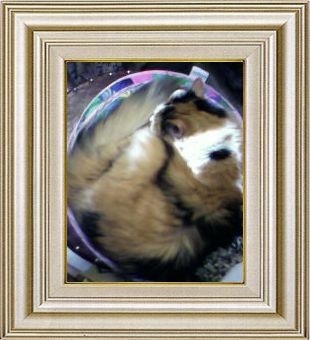 ねこ 猫 あんもにゃいと祭り 29番