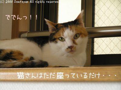 猫さんは座っているだけ・・・。