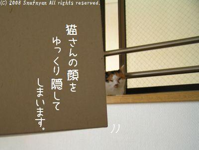 猫さん顔を隠します。