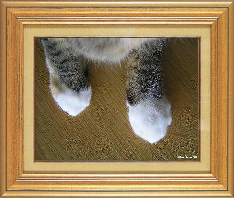 ねこ 猫 猫の手祭り 01番