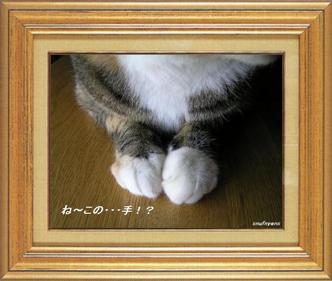 ねこ 猫 猫の手祭り 02番