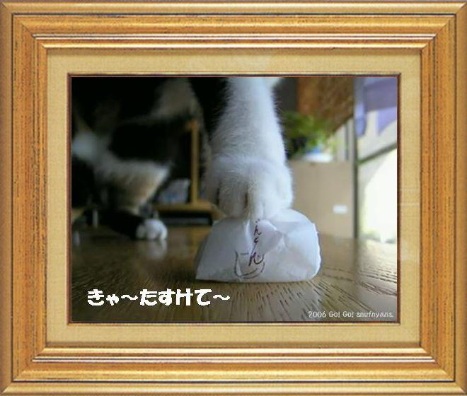 ねこ 猫 猫の手祭り 03番