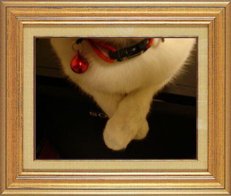 ねこ 猫 猫の手祭り 10番