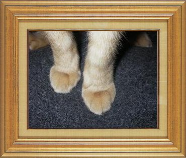 ねこ 猫 猫の手祭り 16番
