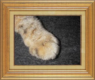 ねこ 猫 猫の手祭り 17番