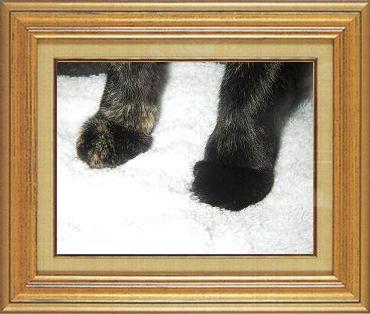 ねこ 猫 猫の手祭り 18番