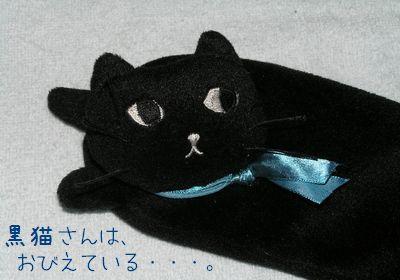 黒猫さんはおびえている・・・。