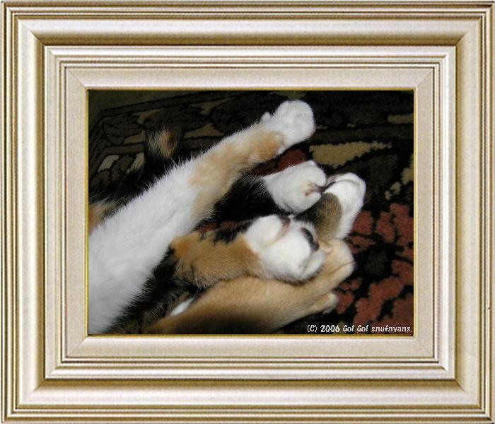 ねこ 猫 手束祭り 01番