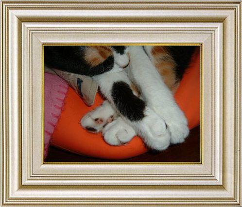 ねこ 猫 手束祭り 02番