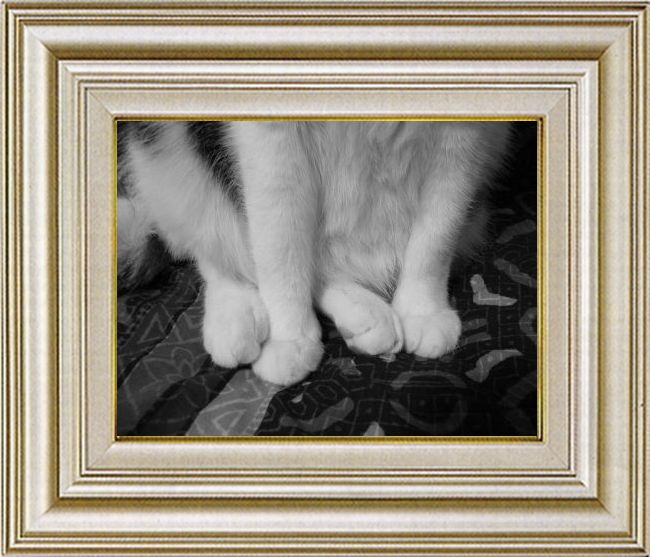ねこ 猫 手束祭り 05番