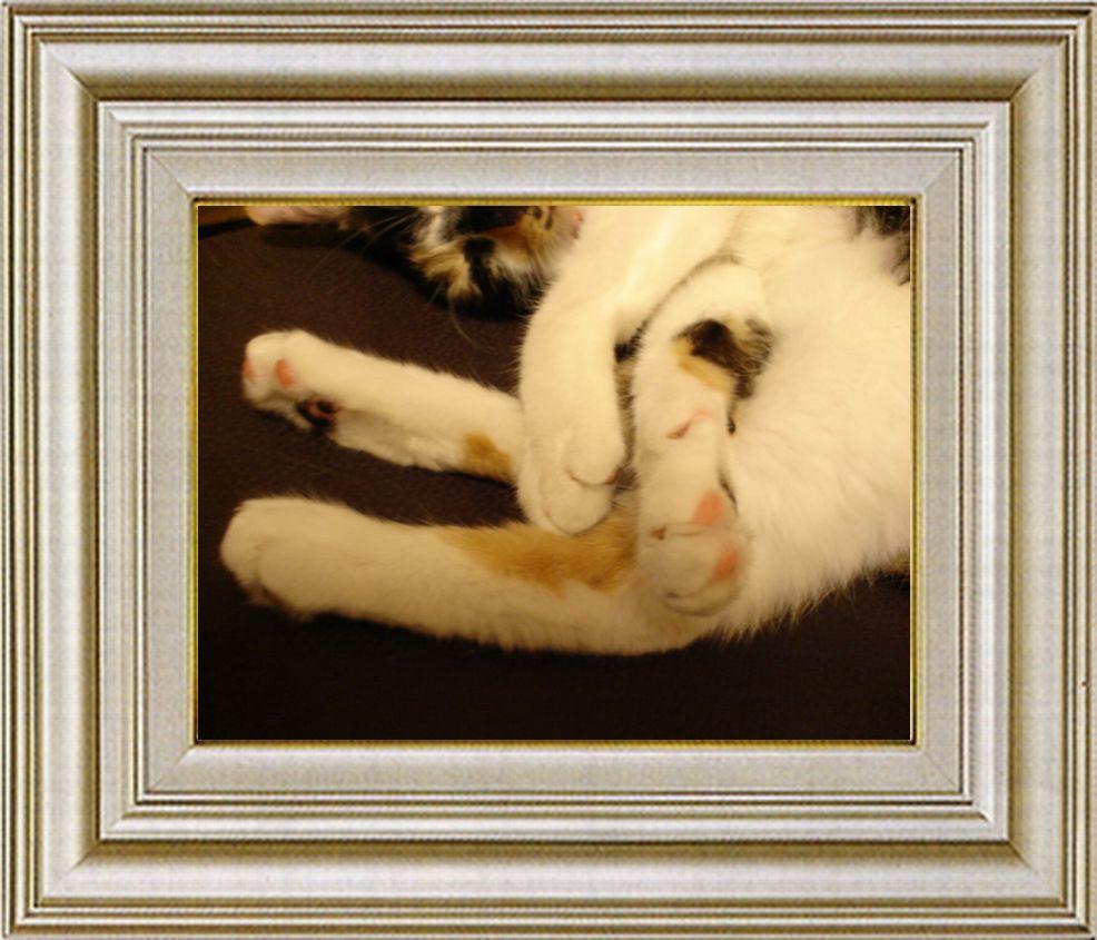 ねこ 猫 手束祭り 06番
