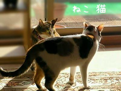 ねこ 猫 試合中~