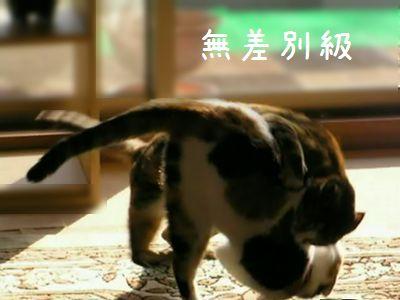 ねこ 猫 無差別級