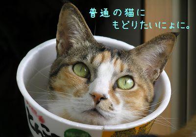 普通の猫に戻る日が来るのかにゃぁ~