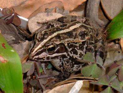 080616_garden_toad.jpg