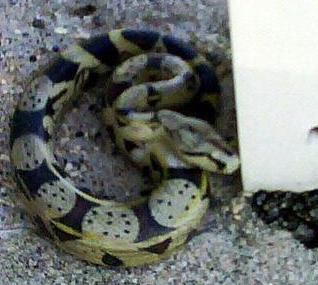 大蛇と見間違え警察出動