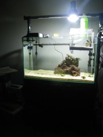 明るい水槽!