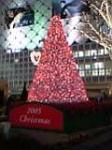 christmas rosso