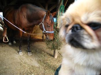 そらちゃんと馬