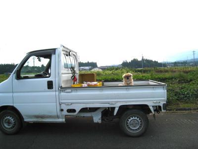トラックに乗せられて。