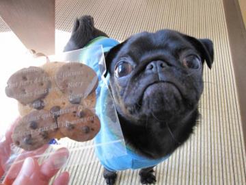 pugcookie.jpg