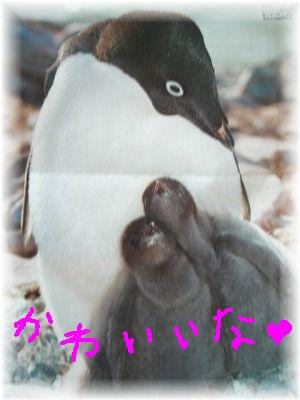 oyako penguin 2
