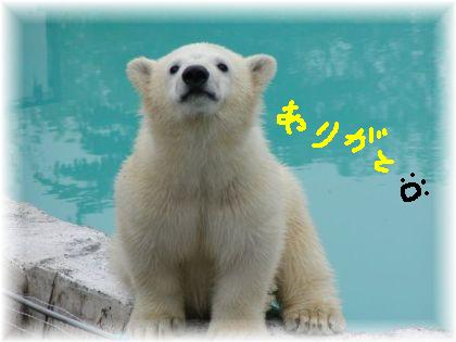 shiro-kuma baby