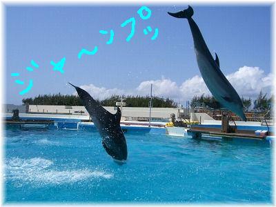 dolphin1-.jpg