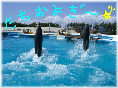 dolphin5-.jpg