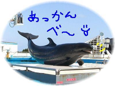 dolphin7-.jpg