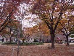 堀江公園1