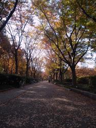 靭公園・秋