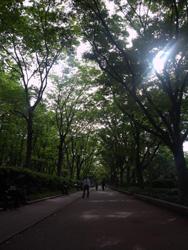 靭公園・春