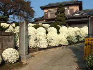 ざる菊園と鈴木宅