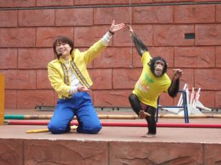 チンパンジー学習発表会