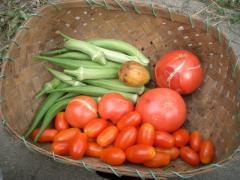 トマトは相変わらずひび割れてます
