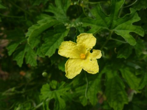 可愛い花が♪