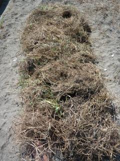 エセ自然農法