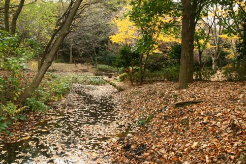 20091128茅ヶ崎公園4