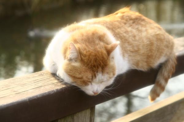 20091227徳生公園1