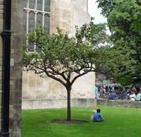 ニュートンの木